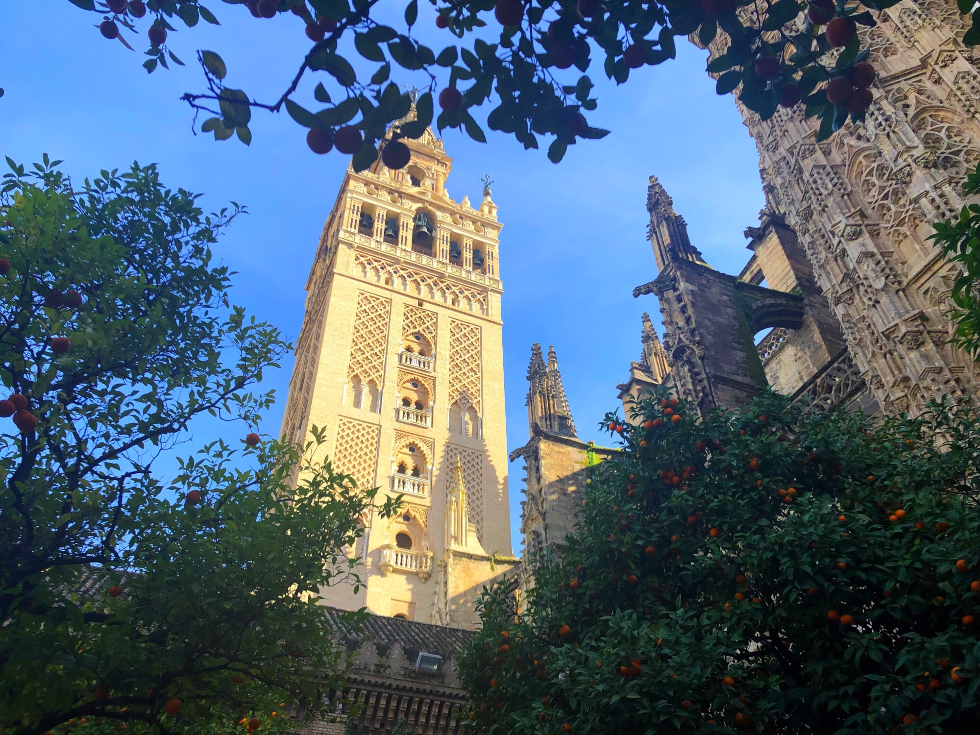 First week in Sevilla: The good, the bad and the oranges